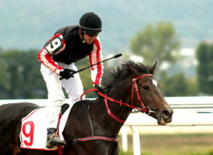 horse and rider after a win in a us race