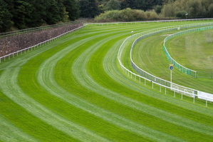 flat racecourse