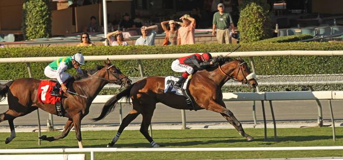 specatators watch as horses run in in an american race