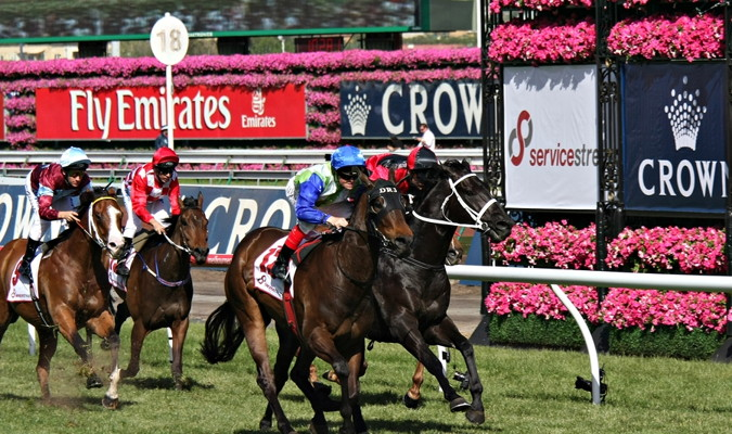 melbourne cup runners on the final straight